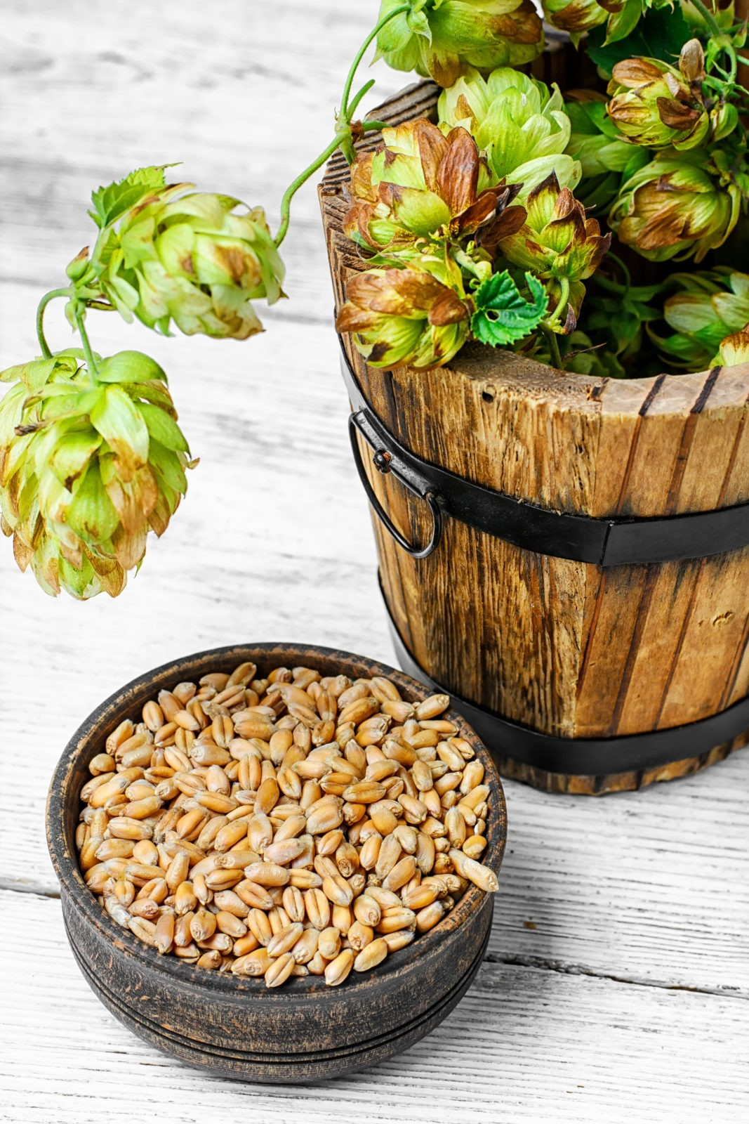 Twig beer hops and seed in the wooden tub